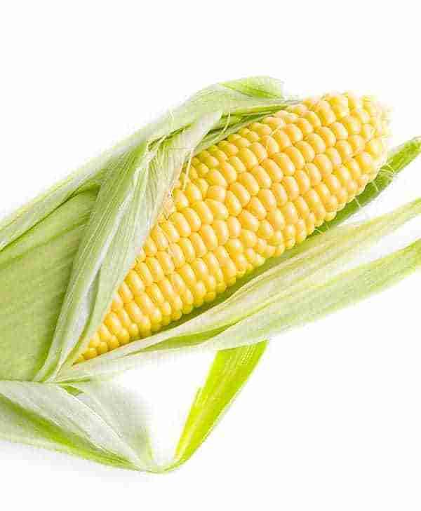 Corn ear - Invigor 8 seed treatment for corn