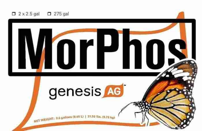 MorPhos top