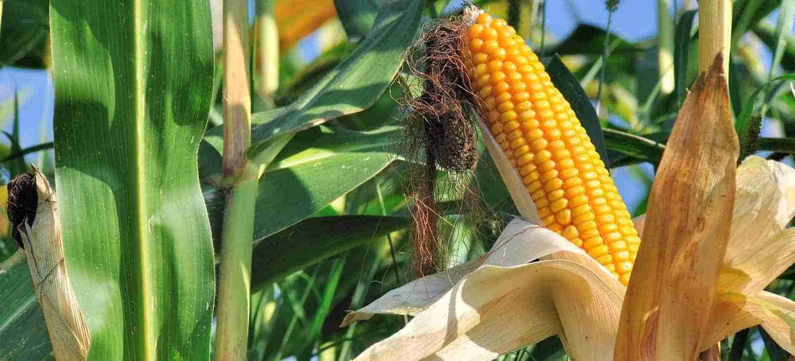 download crop programs