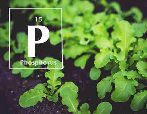phosphorus small