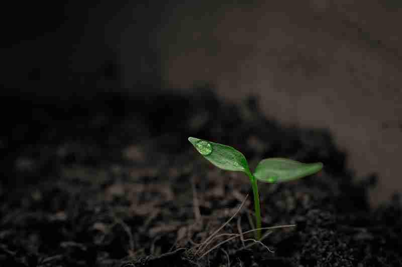 biological farming