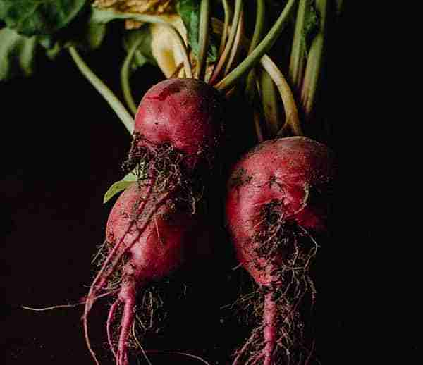 sugar beets new