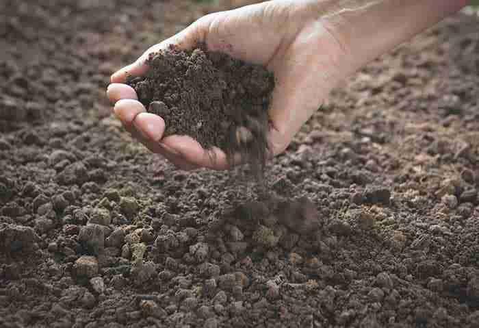 natural soil