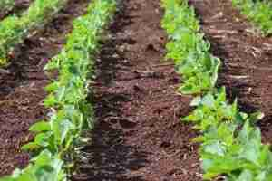 EXP Foliar Ag Nutrients
