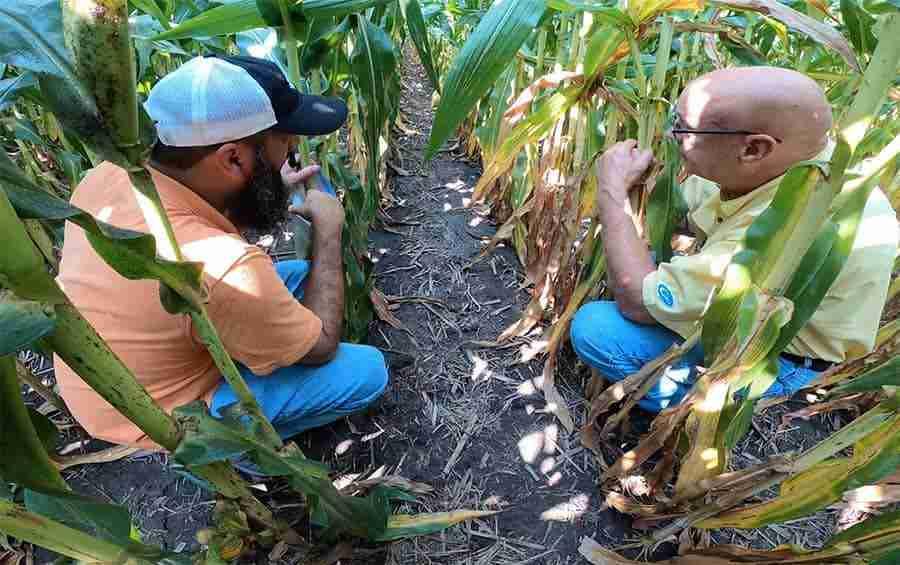 Genesis Ag research on corn