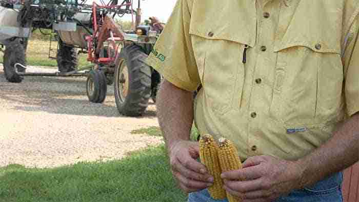Genesis research on corn